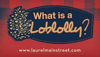 what-is-a-loblolly